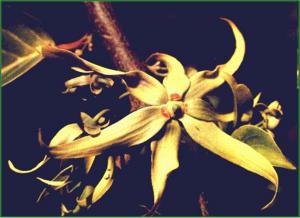 biodas 1